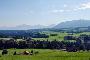 green fields_sm